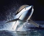 Seabreacher Dolphin