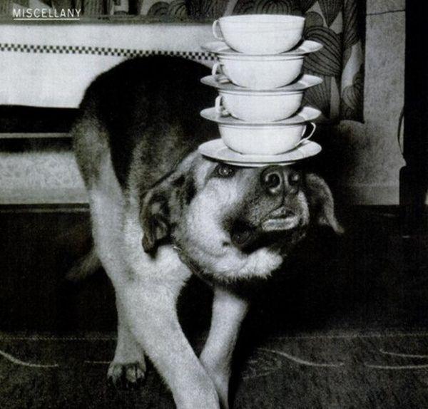 Is it weird ?: Weird Vintage Photos   Weird Retro Photography