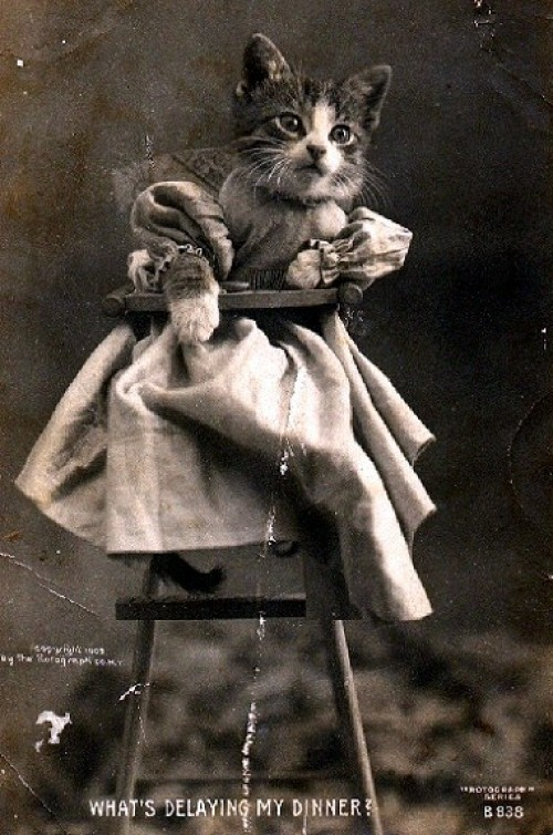 Lolcats of the Late 19th-Early 20th Century