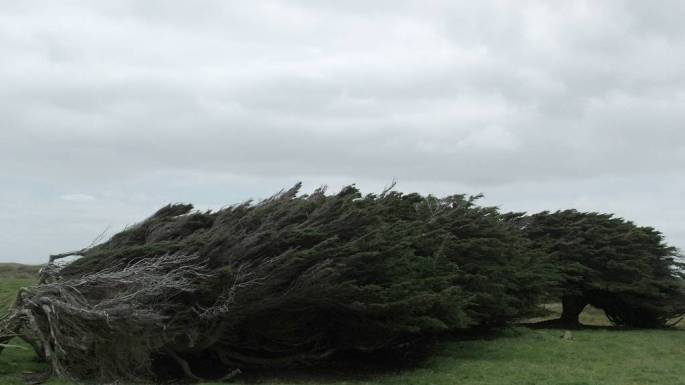 trees-Slope-Point-4