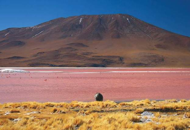 pink-lake-5