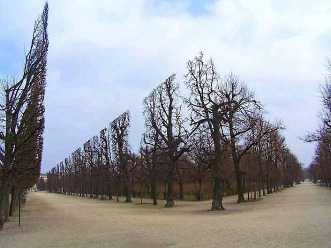 trees-hedges-schonbrunn-garden-1