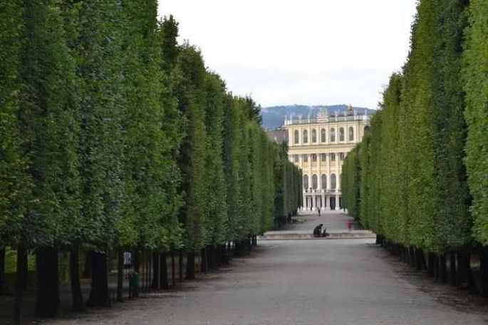 trees-hedges-schonbrunn-garden-2